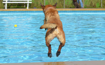 image for Dog Swim Safety